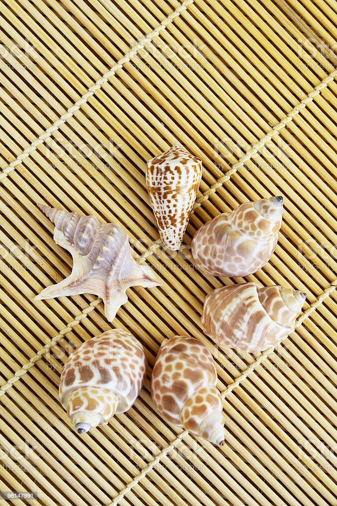 Close-up of seashells on a bamboo mat royalty-free stock photo