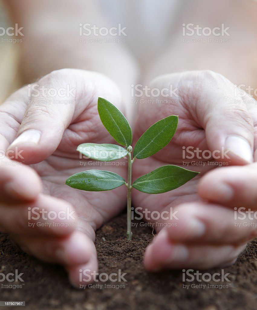 Close-up of seeding on the ground protected by two hands royalty-free stock photo