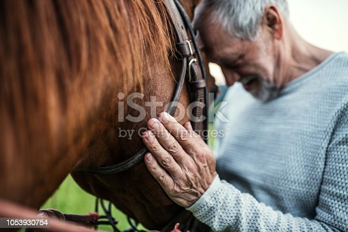 A close-up of unrecognizable senior man holding a horse outdoors.