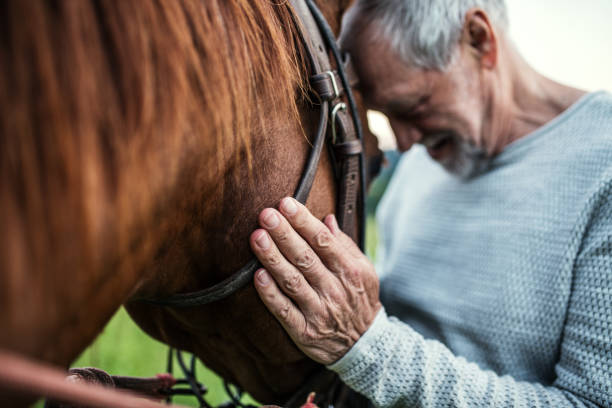 Closeup of senior man holding a horse outdoors picture id1053930754?b=1&k=6&m=1053930754&s=612x612&w=0&h=hcujscbcld1vmnzu7tspgbc2njfu7p36xw7cpwqcfbc=
