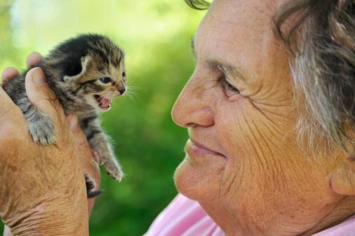 istock Close-up of senior woman holding a tiny gray kitten 119498932