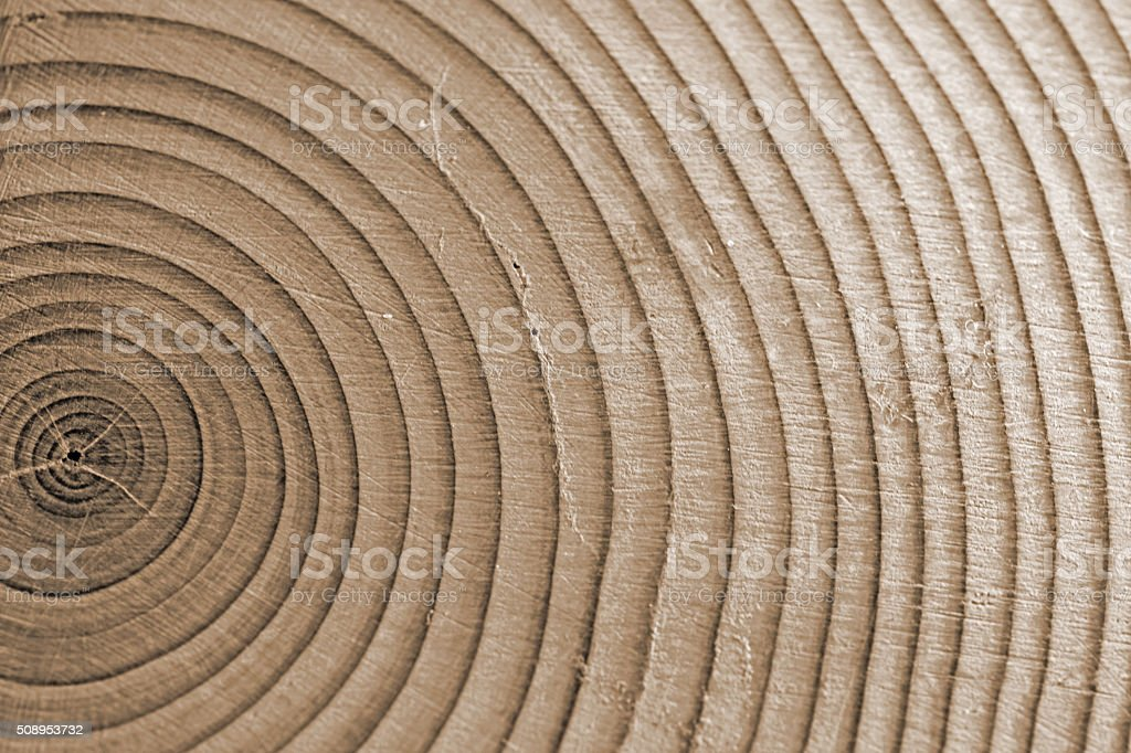 Close-up of sepia toned  Wood Rings From a Conifer Tree stock photo