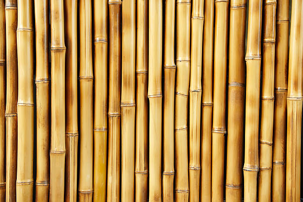 Close-up of several bamboo sticks in a row圖像檔
