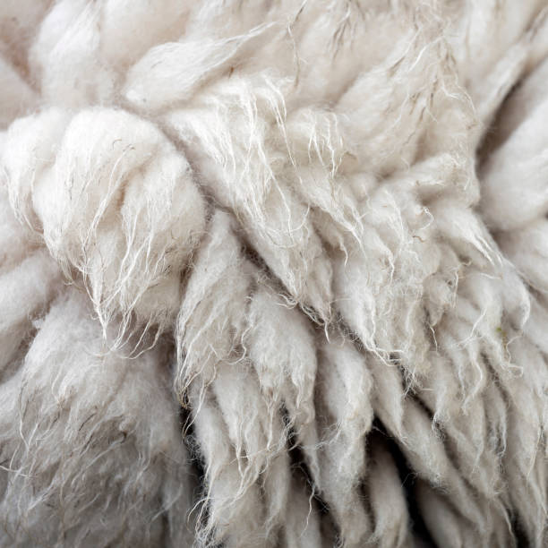 nahaufnahme von schaffell an lebenden schafen - lammfell stock-fotos und bilder
