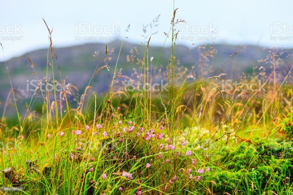 Closeup of shot wild growing plants royalty-free stock photo