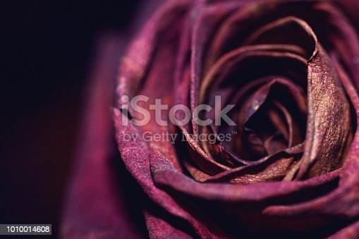 A close-up shot of a single delicate dried rose.