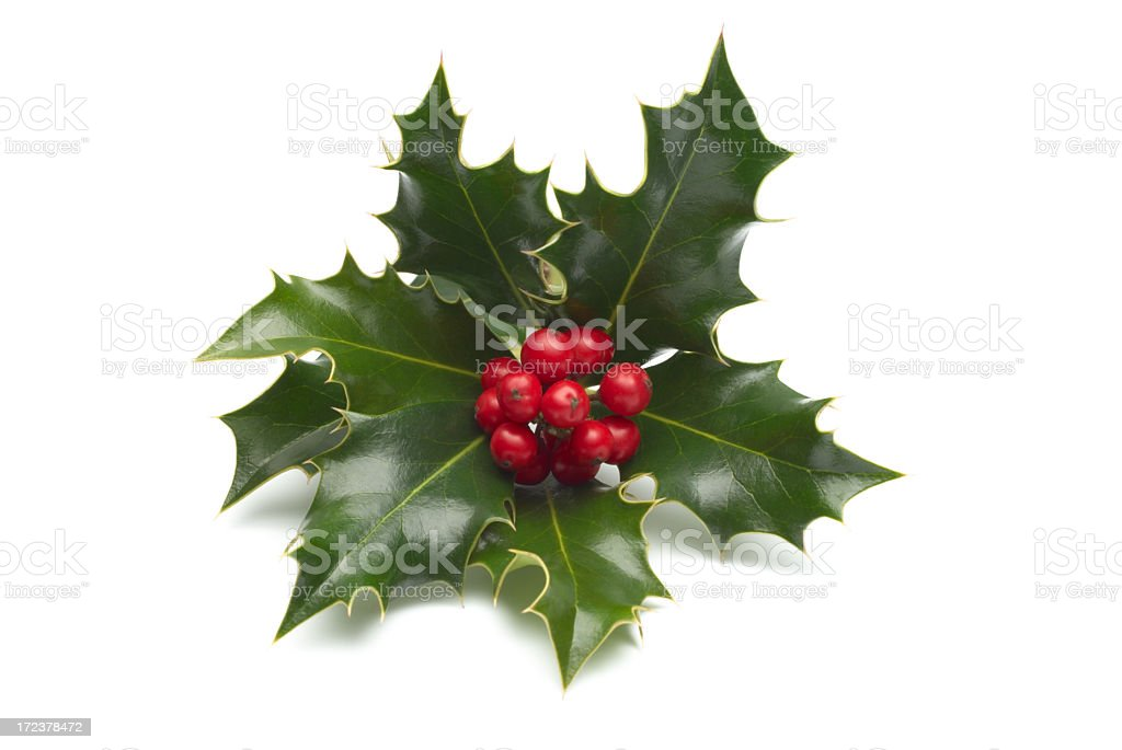 Close-up of single holly bunch on white background stock photo