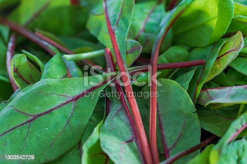 istock Close-up of small leaves with red stems of gold leaf gold 1303542729