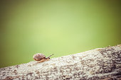 Closeup of snail on the branch, green background