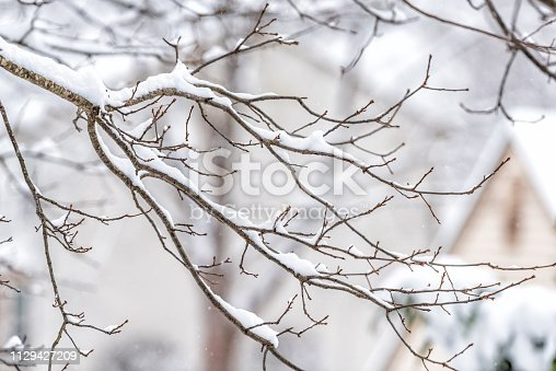 Closeup of snowing weather snowstorm on oak tree branch covered in snow in backyard or front yard with houses background bokeh in Fairfax, Virginia