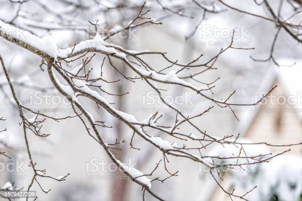 Photo of Closeup of snowing weather snowstorm on oak tree branch covered in snow in backyard or front yard with houses background bokeh in Fairfax, Virginia