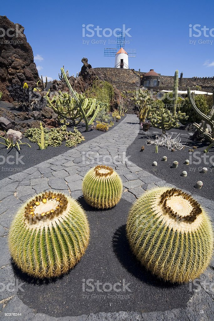 A closeup of some cacti on a cobblestone road royalty-free stock photo