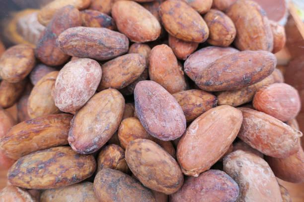 一些乾可哥豆的特寫。圖像檔