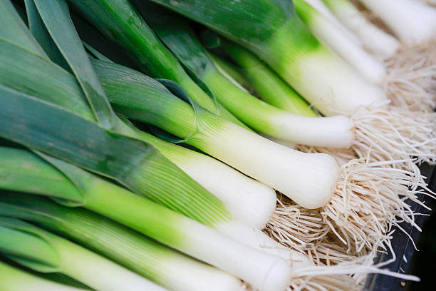 Closeup of some fresh Leeks with the white bulb – Foto