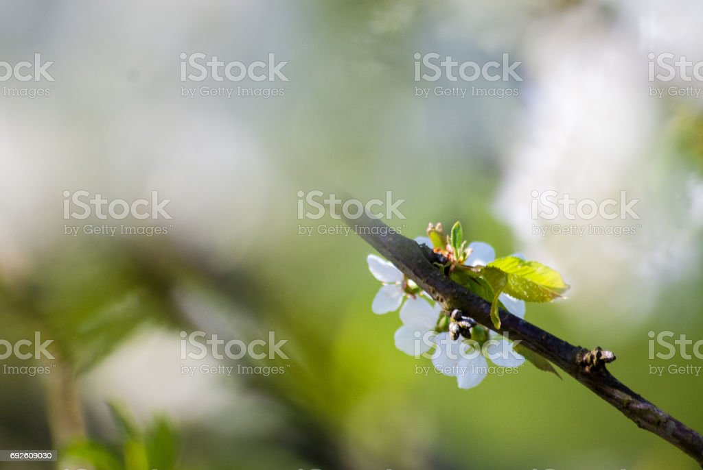 Closeup of spring flowers stock photo
