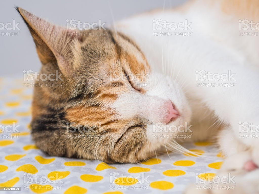 Closeup de gato listrado dormir na cama foto royalty-free