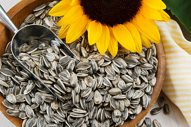 Closeup of Sunflower Seeds stock photo