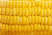 Close-up of yellow corn