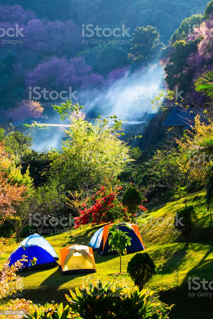 Close-Up Of Tents On Meadow stock photo