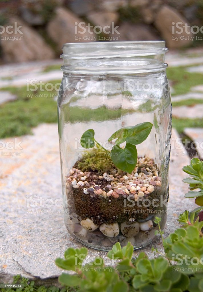 Close-up of terrarium planter grown in a glass jar stock photo