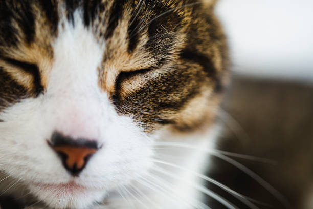 Close-up of the face of a cat stock photo