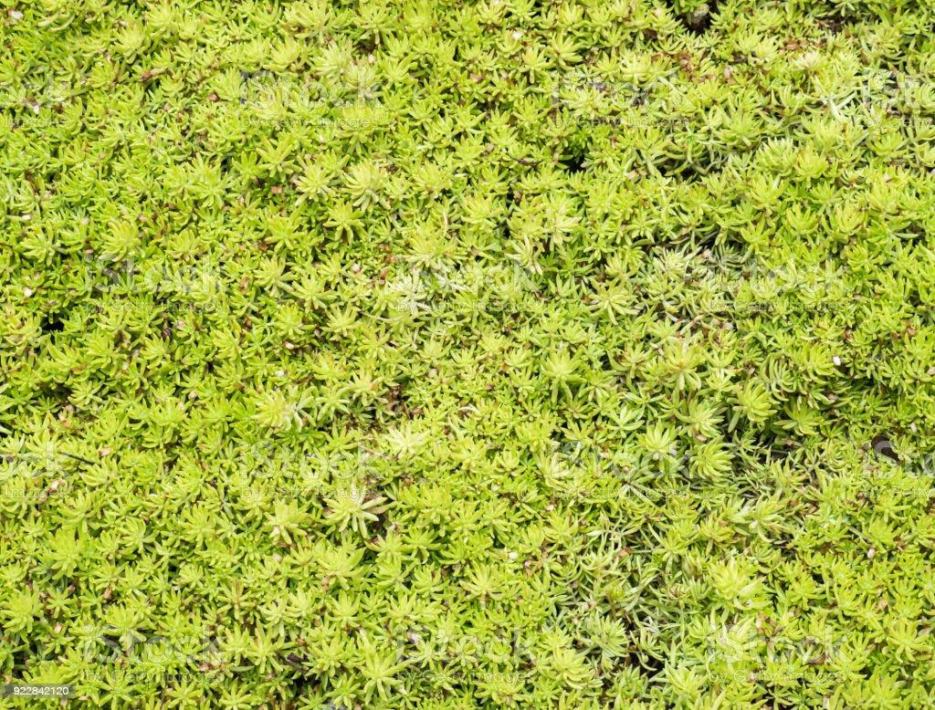Closeup of the fresh green plant. stock photo
