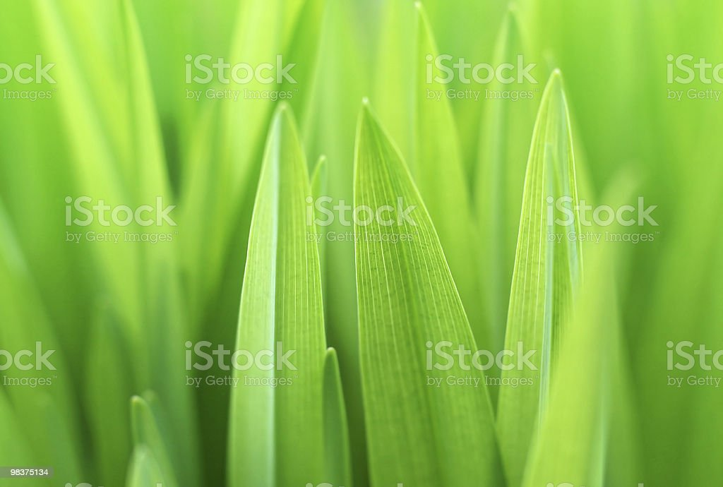 Closeup of the green grass royalty-free stock photo
