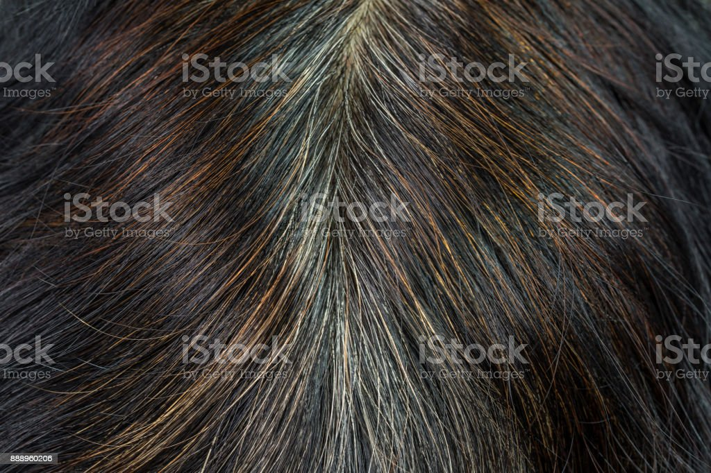 Close-up of the hair that starts to gray hair and brown hair from chemical. stock photo