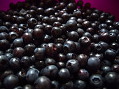 Macro of freshly picked wild blueberries fom the forest, a tasty natural ingredient of vegan medicine food