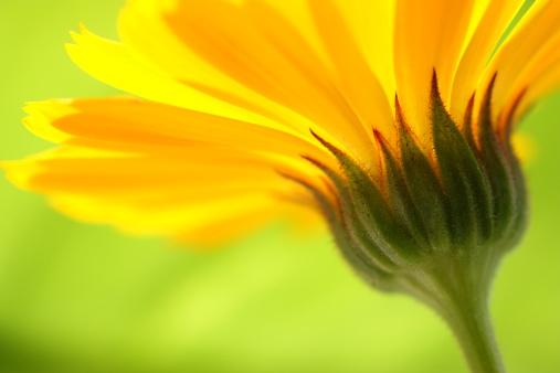 Beautiful summertime flower.