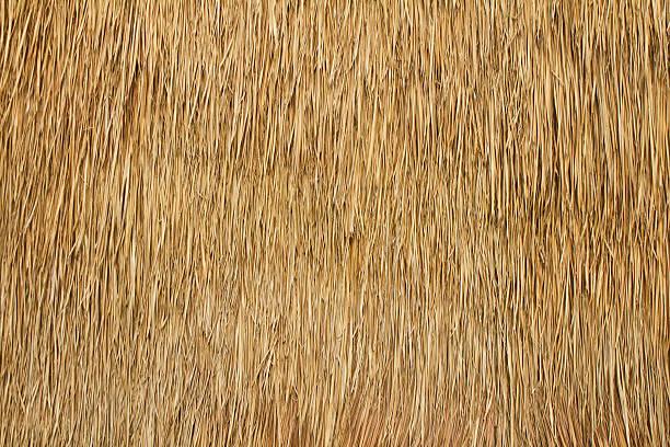 bulrush wand. - strohdach stock-fotos und bilder