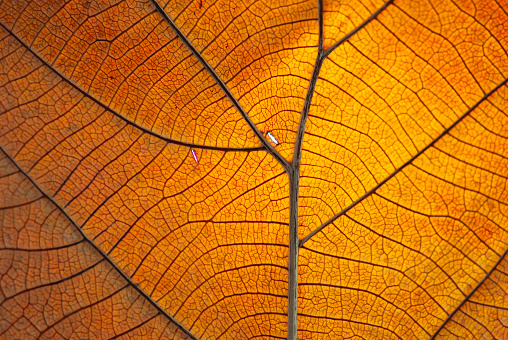 istock Close-up of the veins on a dry orange leaf 182880549