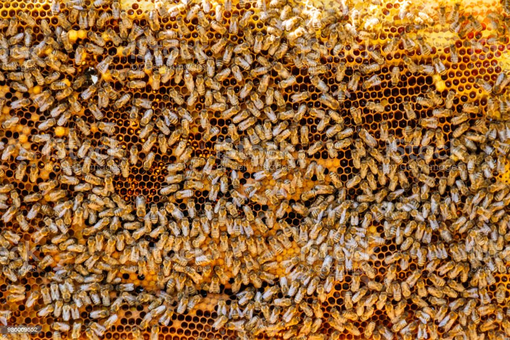 Close-up of the working bees on the honeycomb with sweet honey stock photo