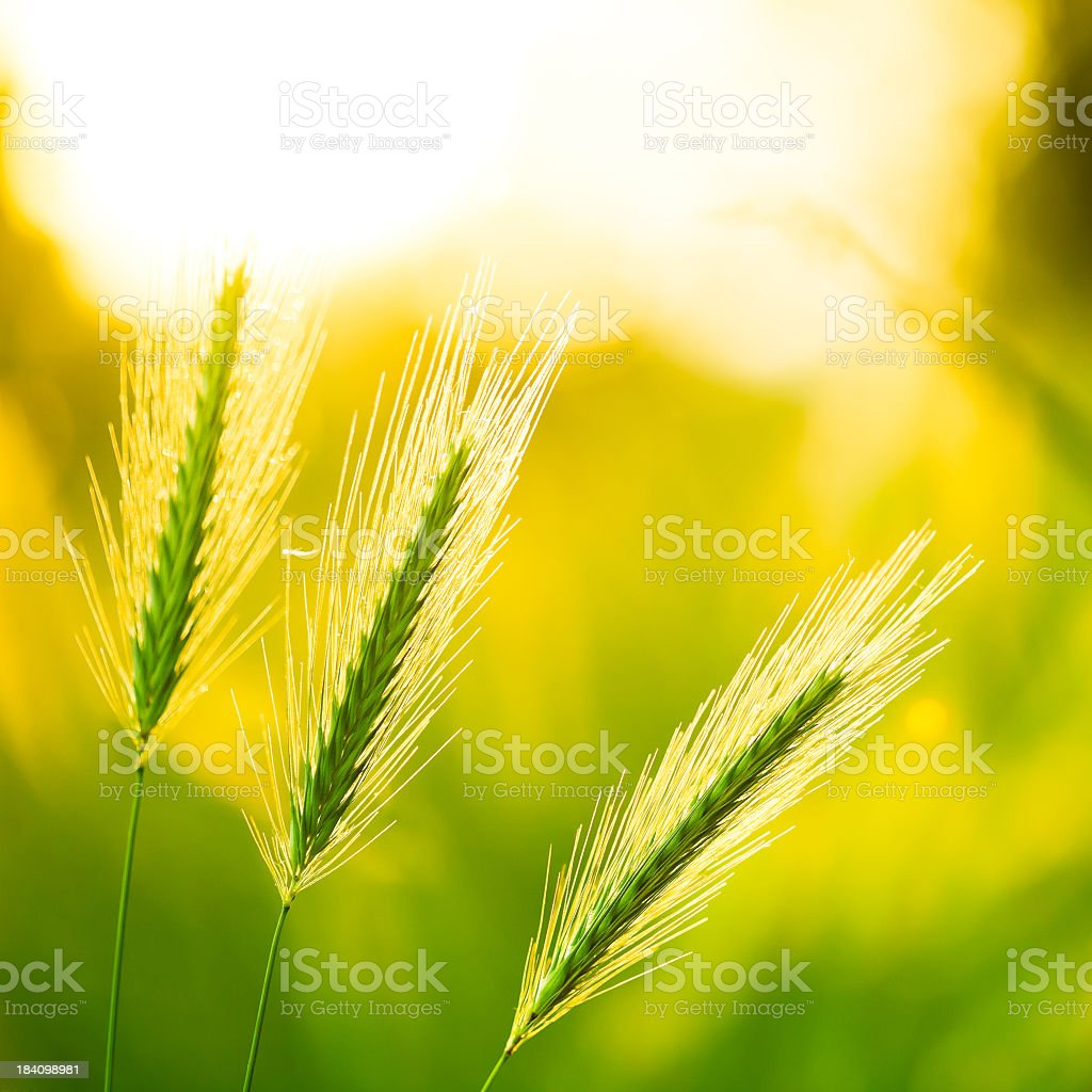 Close-up of three wild flowers growing on a sunny day royalty-free stock photo