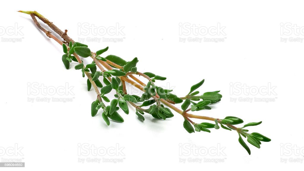 Closeup of thyme royalty-free stock photo