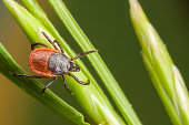 istock Closeup of tick on a plant straw 453540005