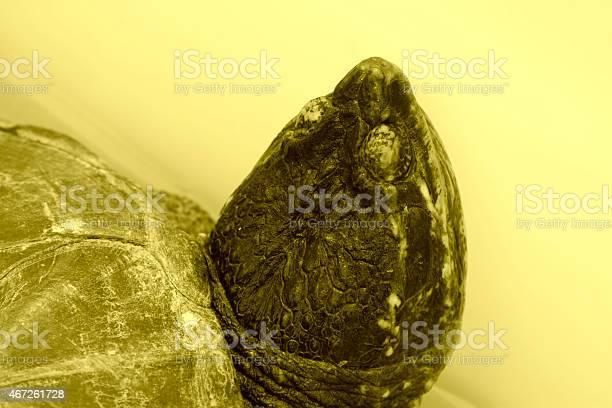Closeup of tortois head in a market lovely reptile picture id467261728?b=1&k=6&m=467261728&s=612x612&h=qgpndzcvkuxxv9bs7tor kmgeyt5u7e seitxsc6eqs=