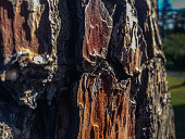 Closeup of tree bark at Botanic Garden, Christchurch, South Island, New Zealand