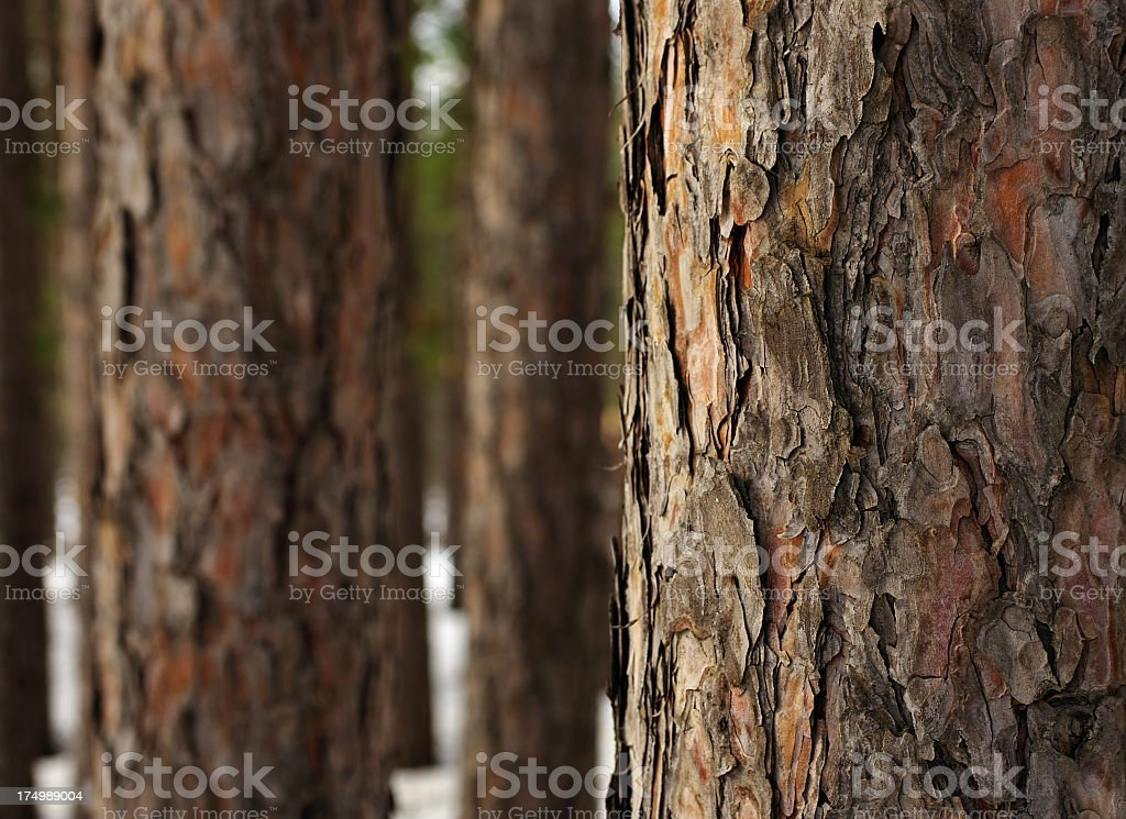 A close-up of tree bark in a forest stock photo