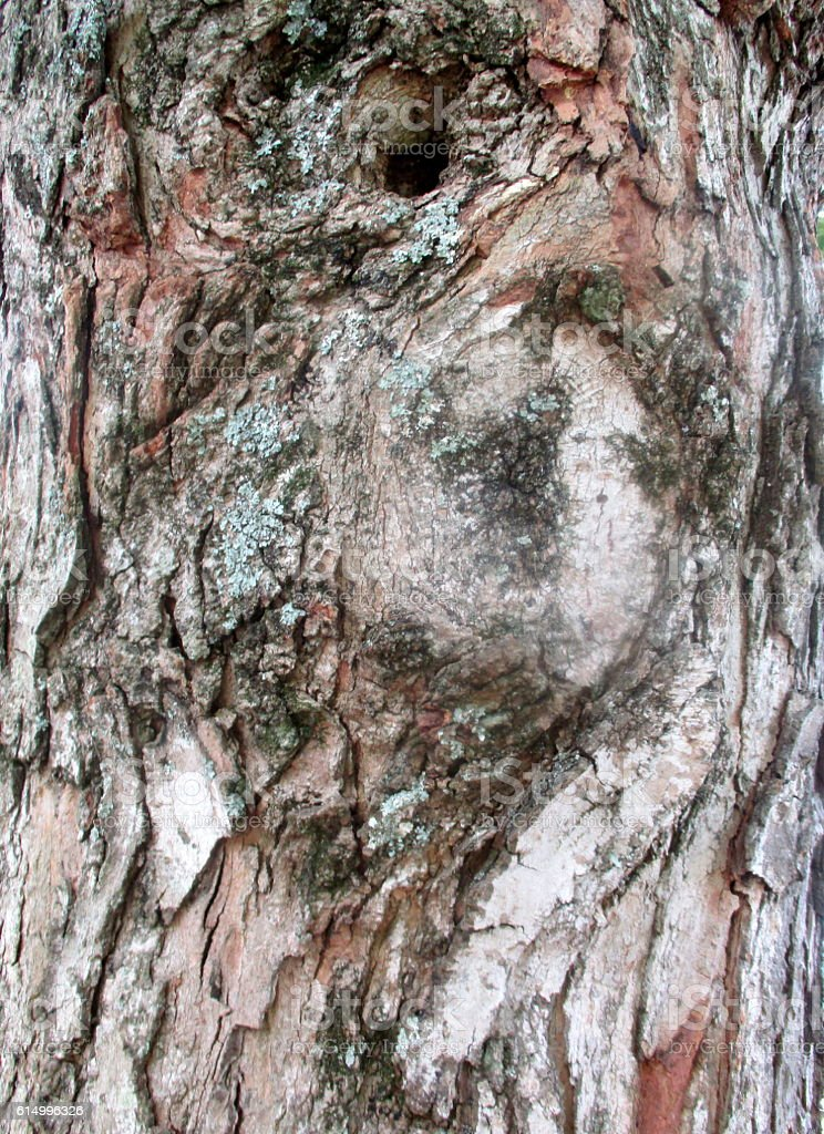 Close-up of Tree Bark royalty-free stock photo