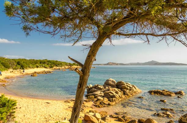 nahaufnahme der baum an einem strand in palau (sardinien, italien). - palau sardinien stock-fotos und bilder