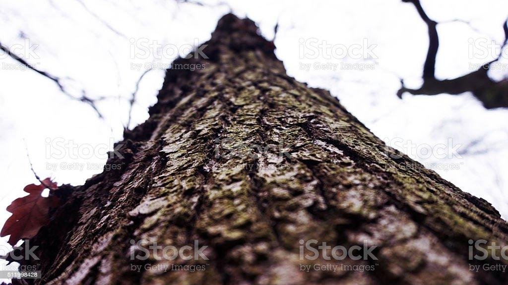 Closeup of tree stock photo