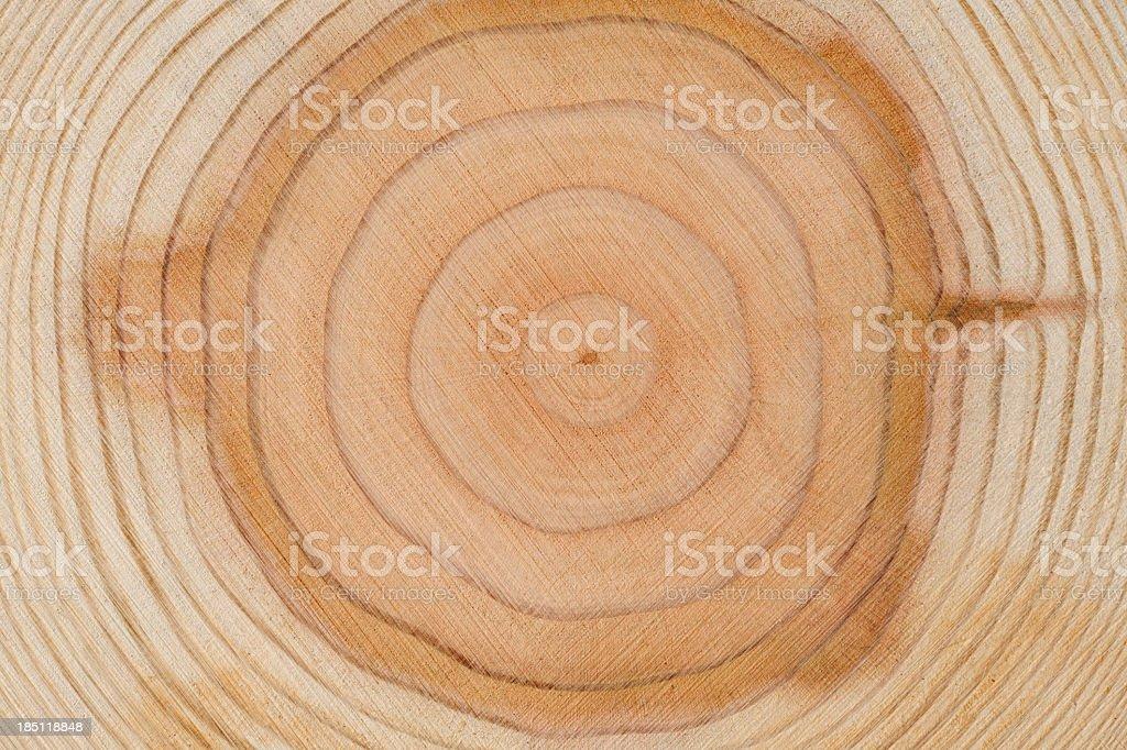 Baum Ringe Textur Hintergrund – Foto