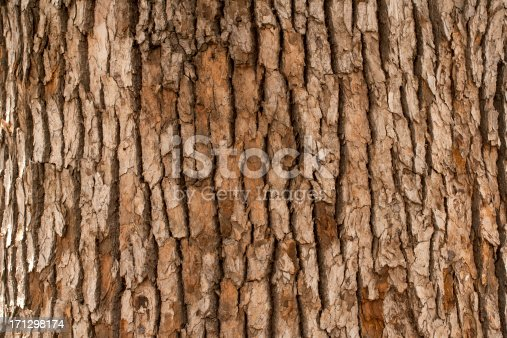 Closeup of tree trunk
