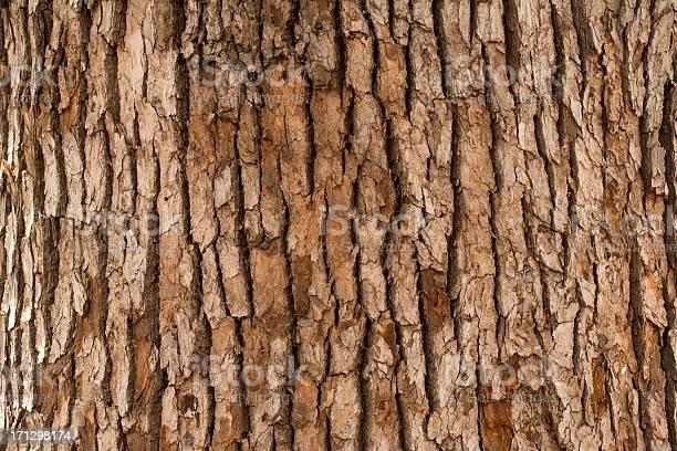 Photo of Closeup of tree trunk