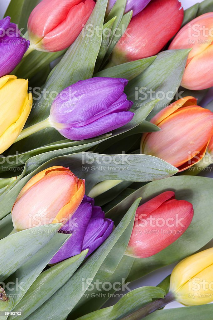 Closeup of tulips stock photo