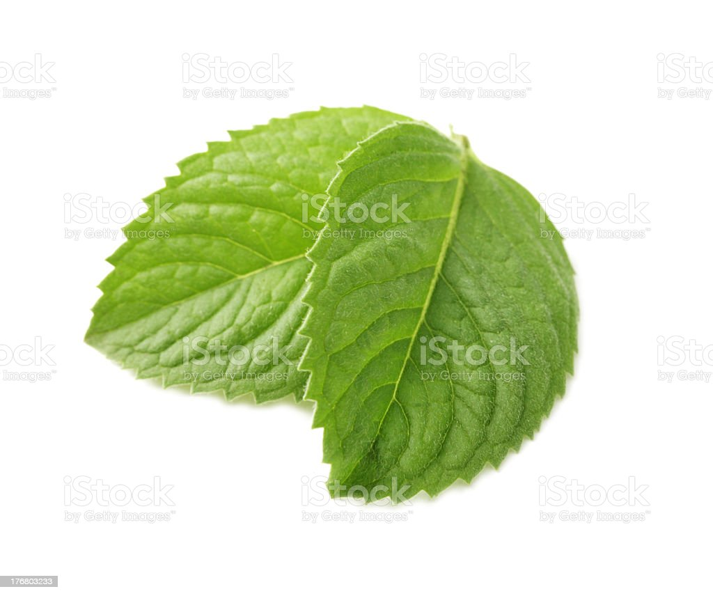 A closeup of two mint leaves, isolated on a white background royalty-free stock photo