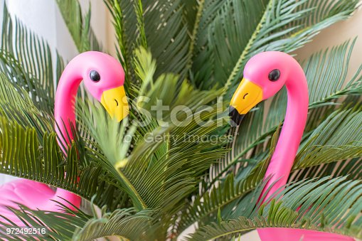 istock close-up of Two pink flamingos in studio. 972492516