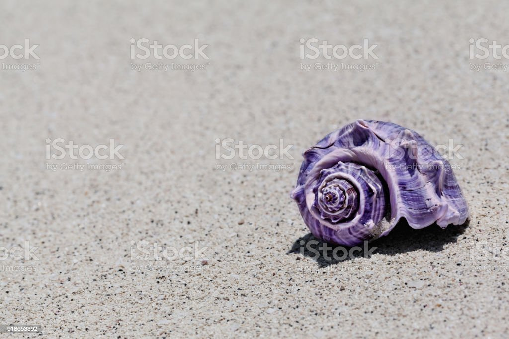 Closeup Of Ultraviolet Spiral Shell On Sandy Beach In The Summer stock photo