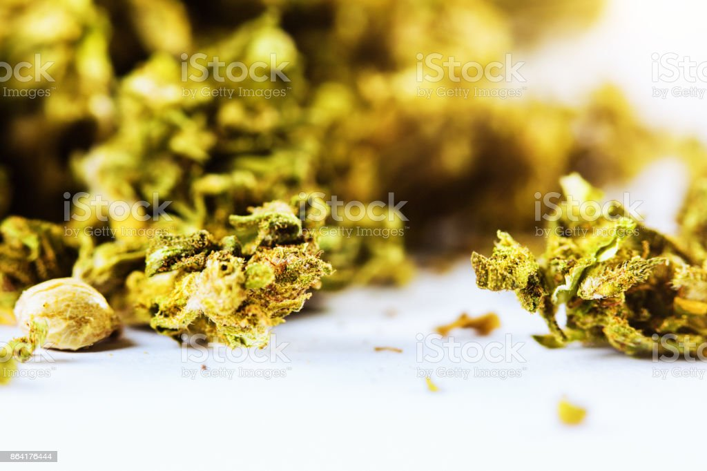 Close-up of unprocessed cannabis sativa royalty-free stock photo